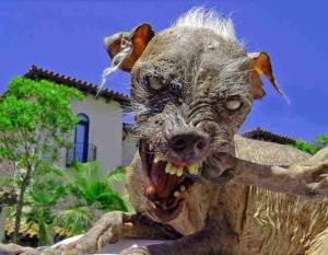 14882-zombies-zombie-dog